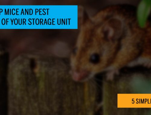 Keeping Mice & Bugs Out Of A Storage Unit