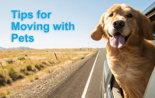 Tips for moving with pets in Colorado